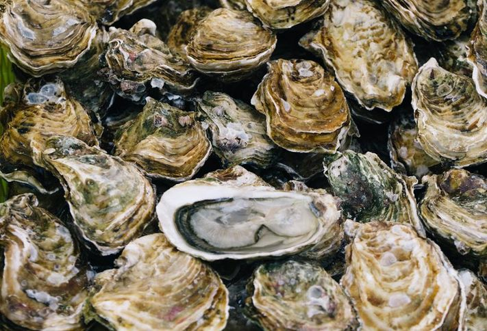 Oysters_int
