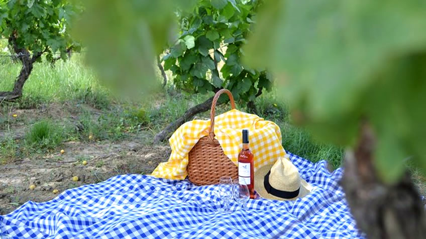 Pacheca Picnic; Picnic in the Vineyards; Picnic in Douro