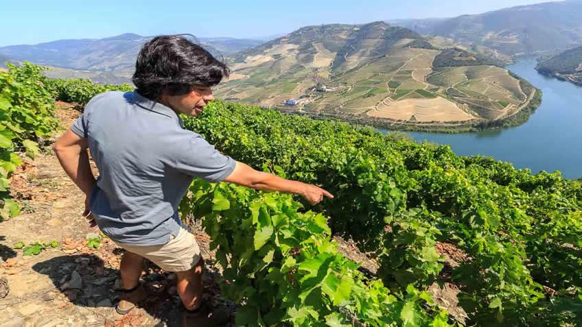 Quinta das Carvalhas; Vineyard Tour; Port Tasting Douro; WInery Visit