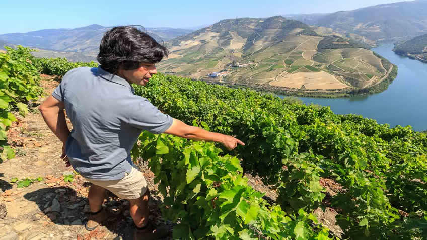 Quinta das Carvalhas; Private Vineyard Tour; Vineyard Tour in Douro