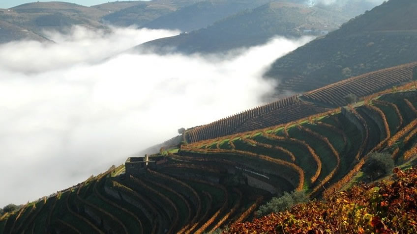 Quinta das Carvalhas; Fall in Douro Valley