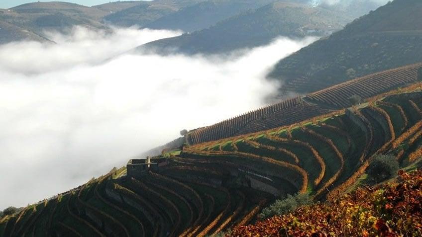 Quinta das Carvalhas; Fall in Douro Valley