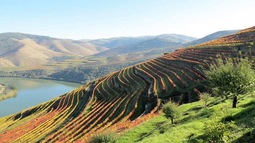 Quinta das Carvalhas; Vineyard Tour; Fall Foliage