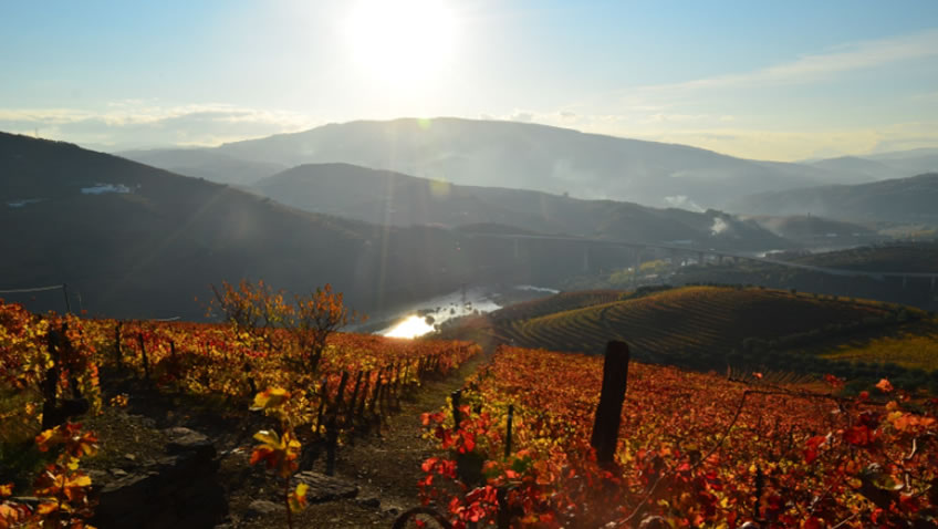 Quinta do Vallado; Fall Tour Portugal; Douro Tour