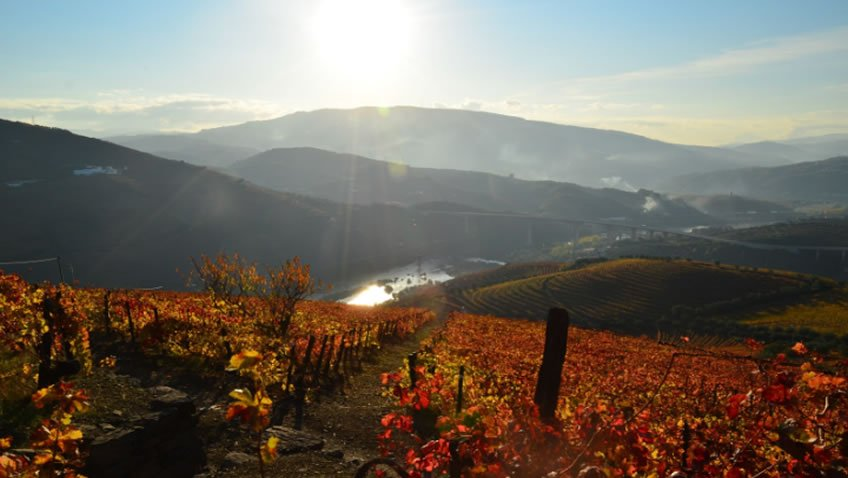 Quinta do Vallado; Fall Tour Portugal; Douro Tour