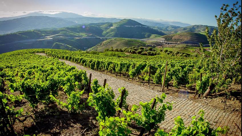 Quinta do Vallado; Harvest in Douro