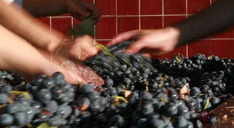 Quinta_Nova_Wine_production-2