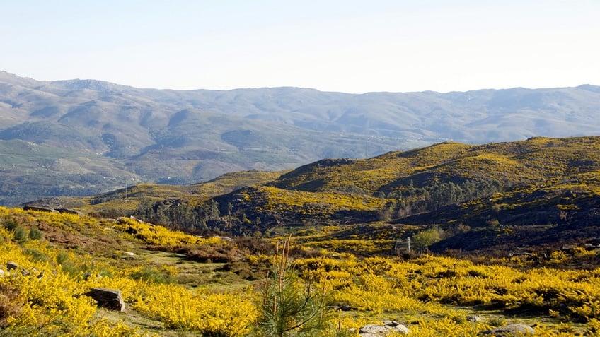 Serra Amarela; Gerês National Park; Wikipedia
