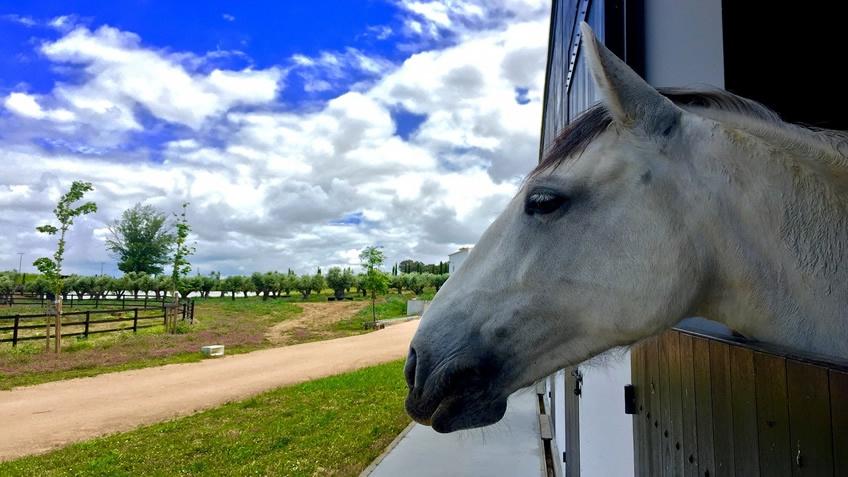 Torre de Palma; Horseback Riding; Alentejo
