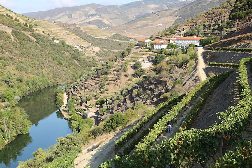Best Douro Wineries - Quinta do Panascal