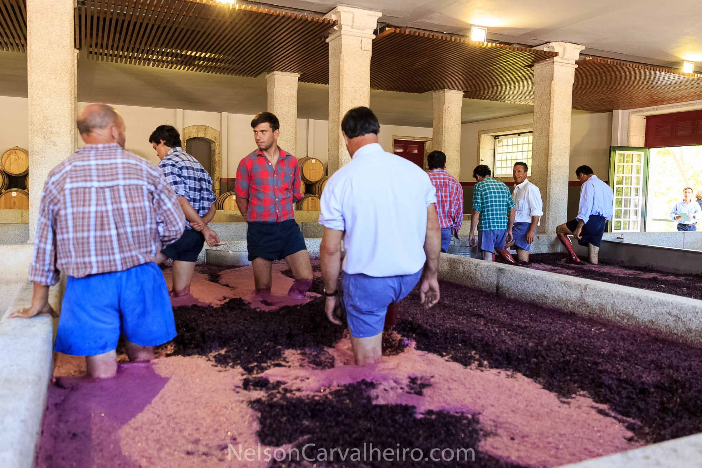 Pacheca Wine Making