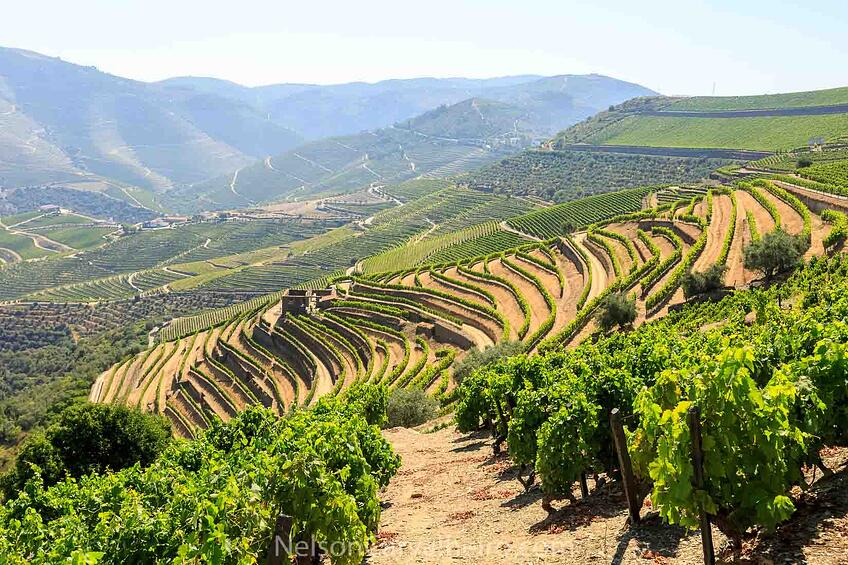 Douro Valley Vineyards