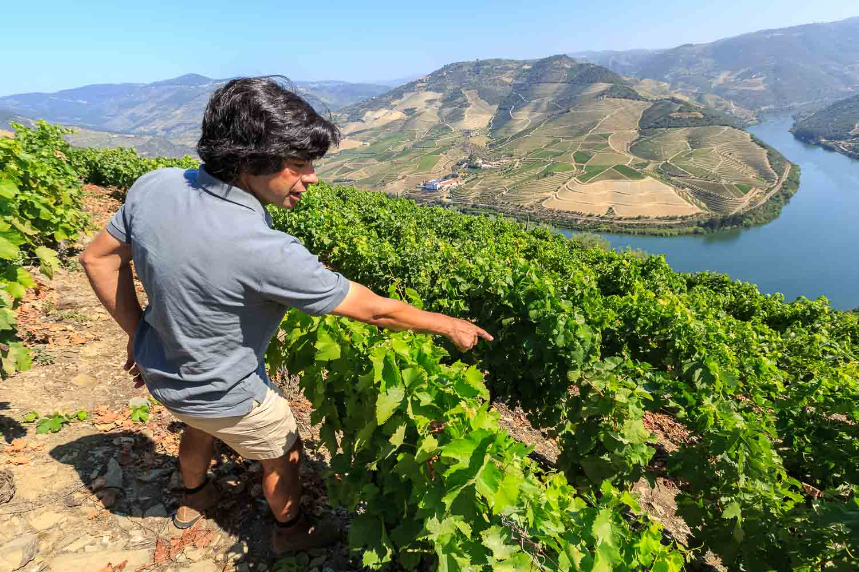 Quinta das Carvalhas Vintage Vineyard Tour