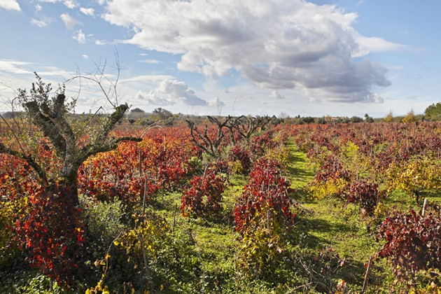 Bairrada-vineyards-2-630x420