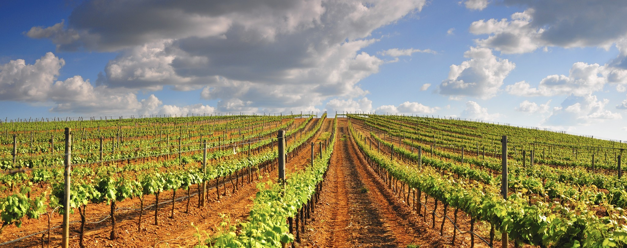 ct-wine-portugal-food-0520-20160518