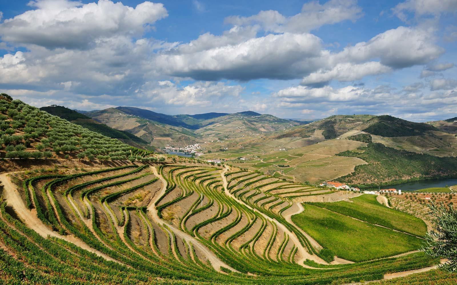 douro-valley-vineyard-PORTUGALWINE1116