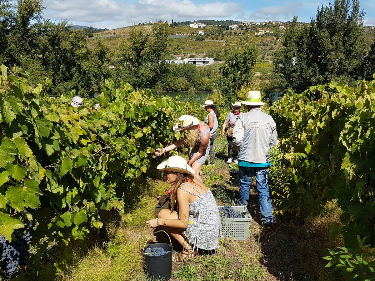 vineyard-work