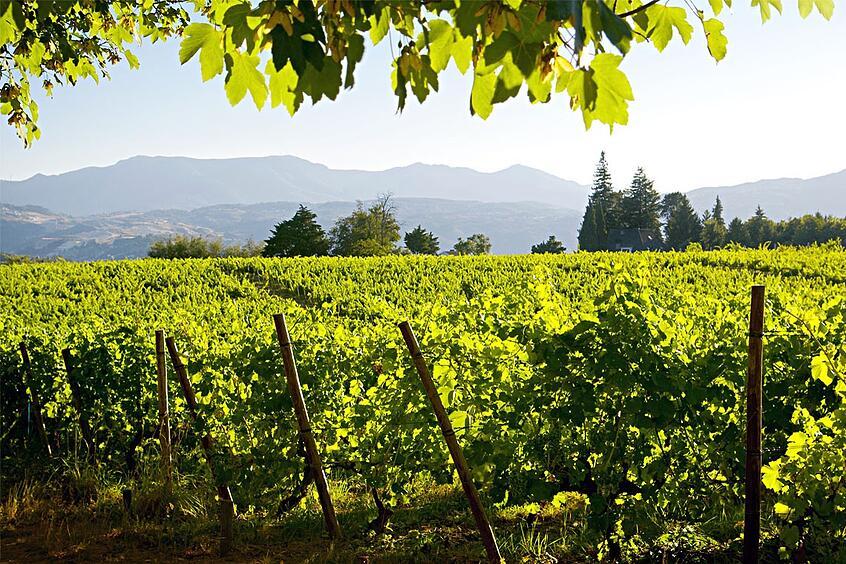 vinho_verde-1-2