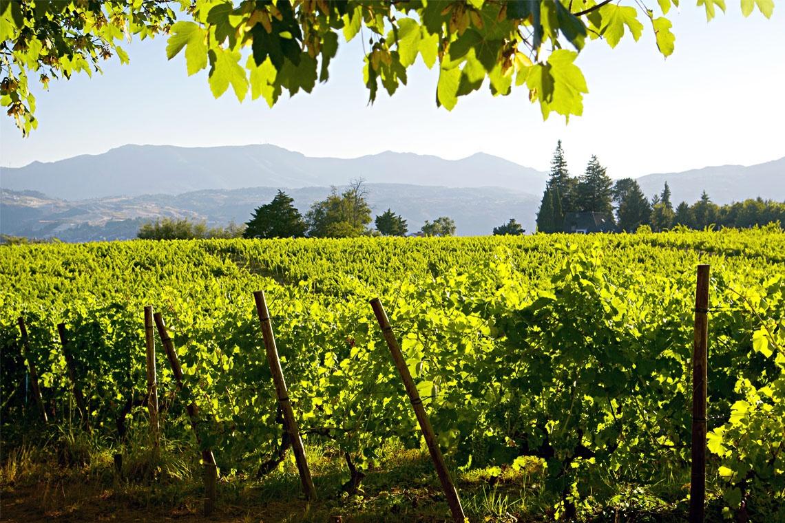 Vinho Verde Wine Region