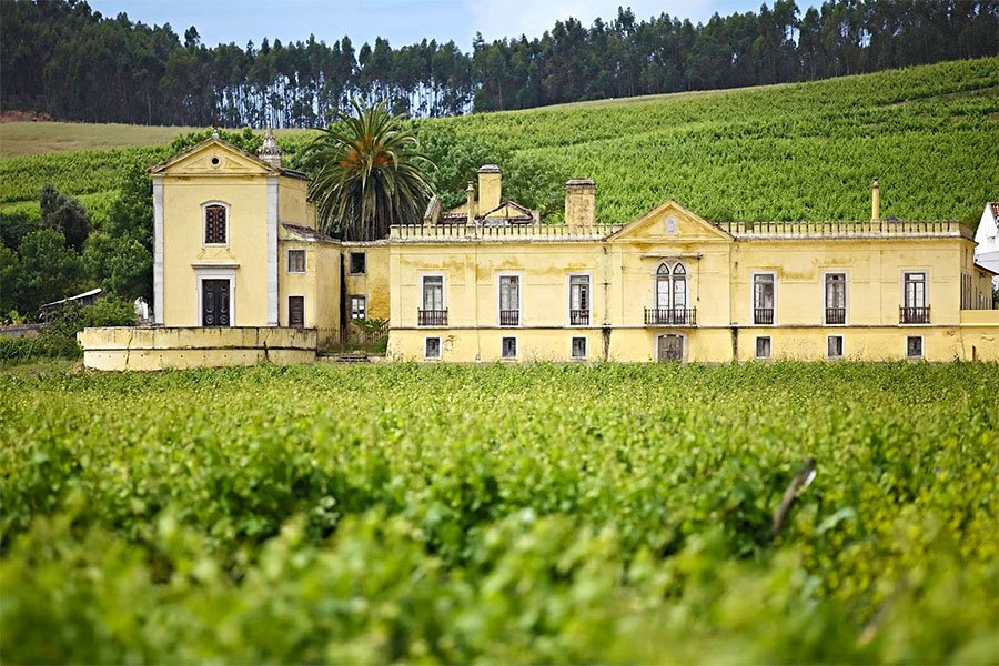 5 Wineries You Can't Miss in Lisbon