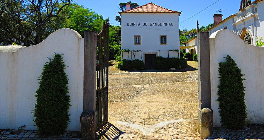 Quinta do Sanguinhal; Wineries in Lisbon; Wine Tasting in Lisbon