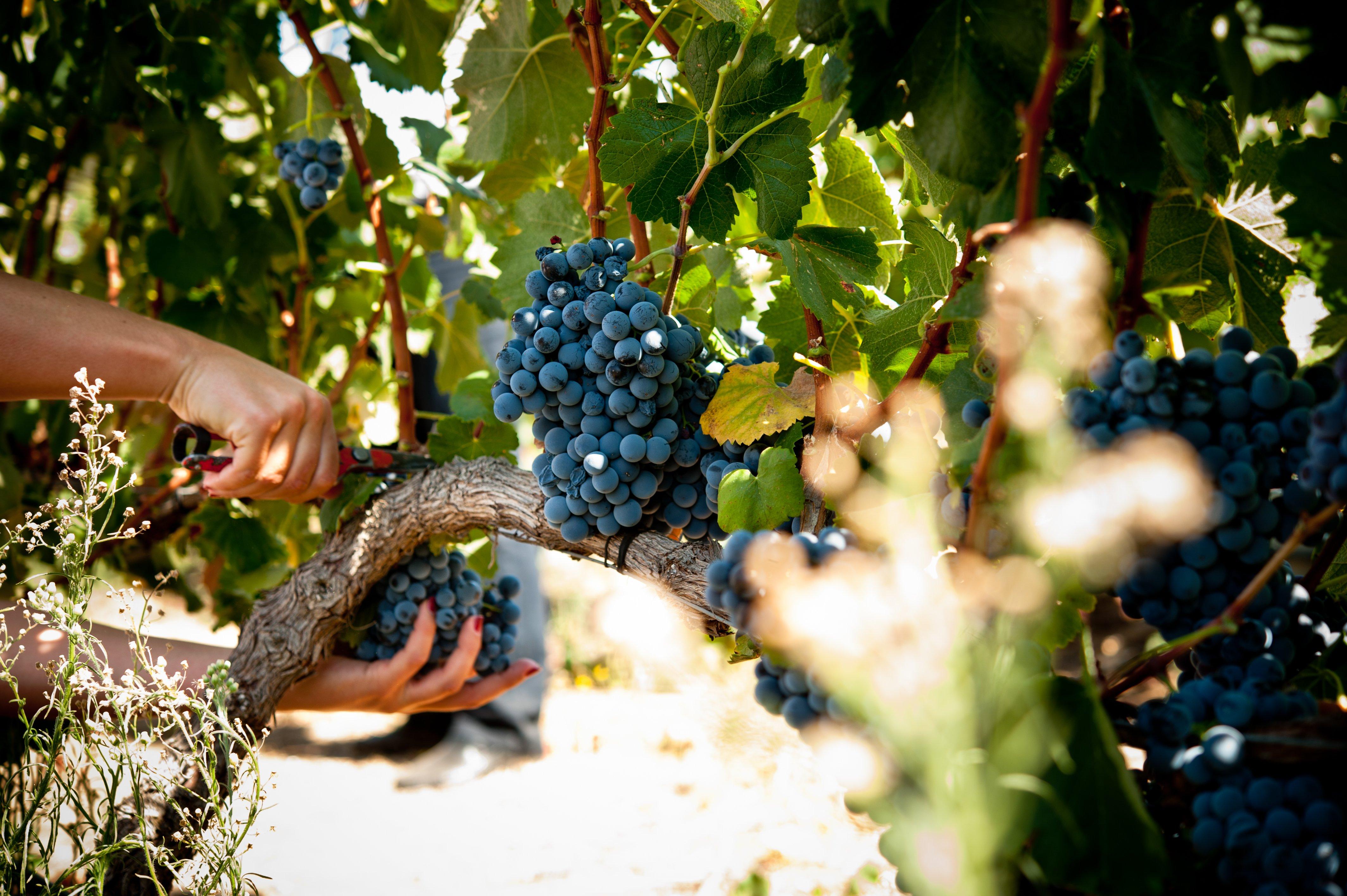 winetourismportugal.com_2012091_GONC¦ºALO_VILLAVERDE_168