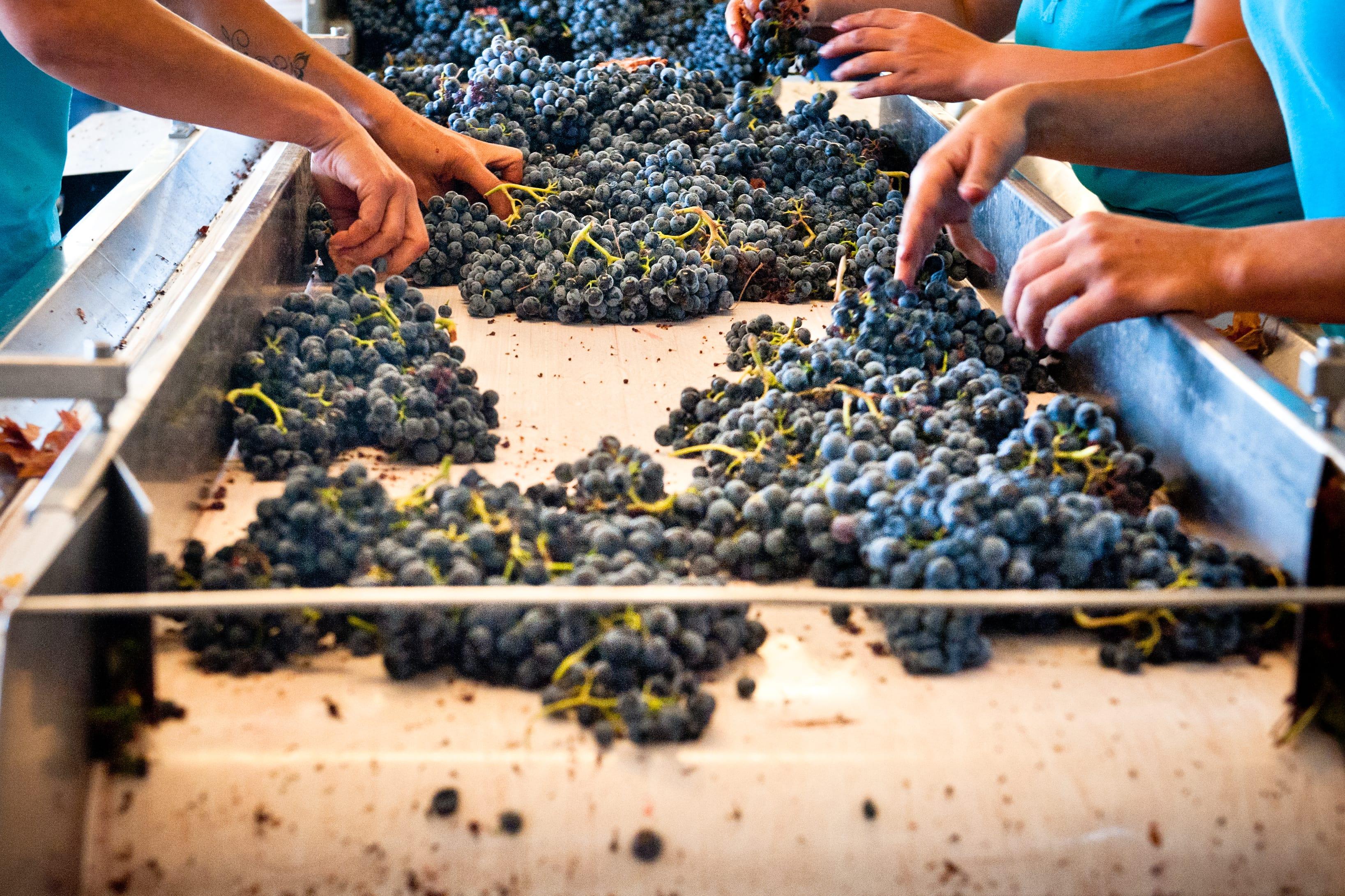 winetourismportugal.com_2012091_GONC¦ºALO_VILLAVERDE_311-min