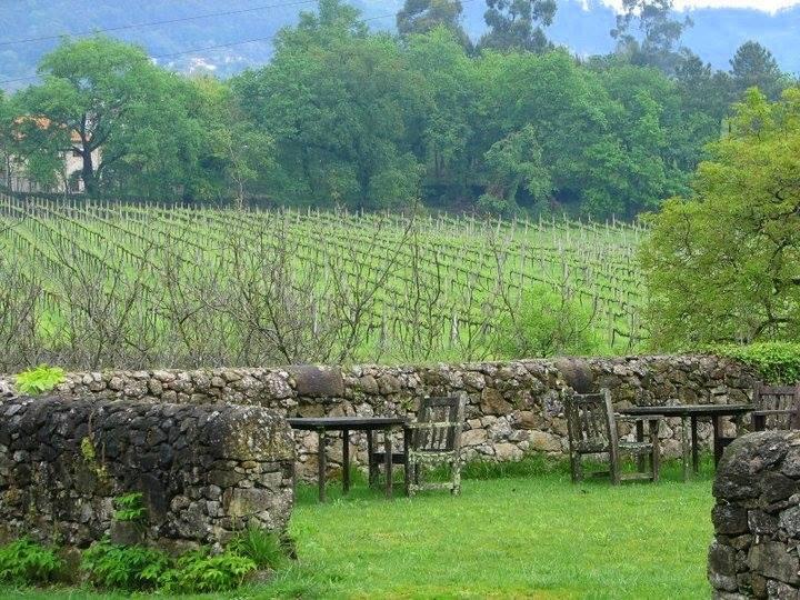vinho verde, wine region, portugal