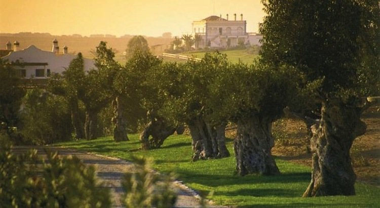 10 Wineries you can't miss in Alentejo