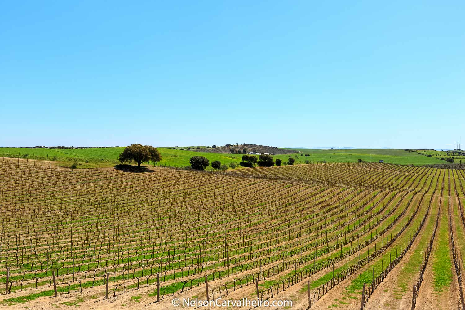 Alentejo, space and time to breathe all year round - part 1/2