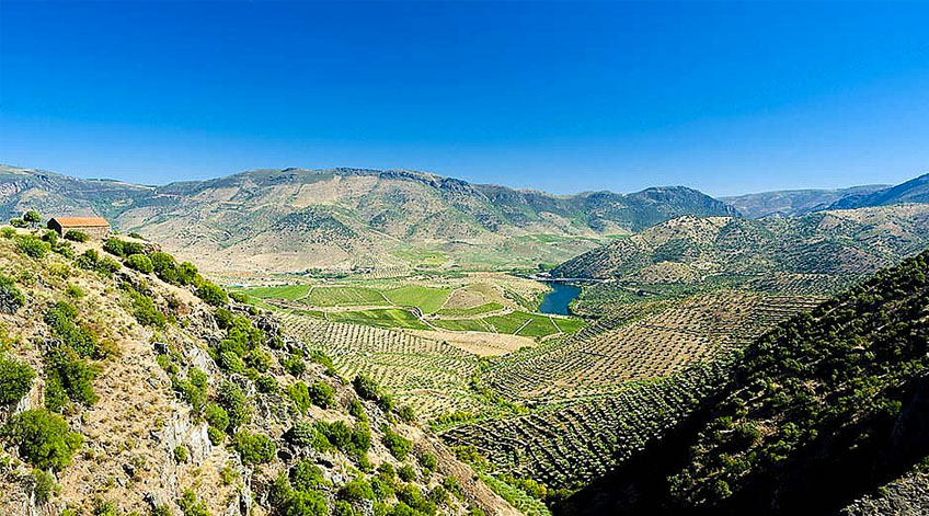 Taste Portuguese Wines and Visit its Wine Regions