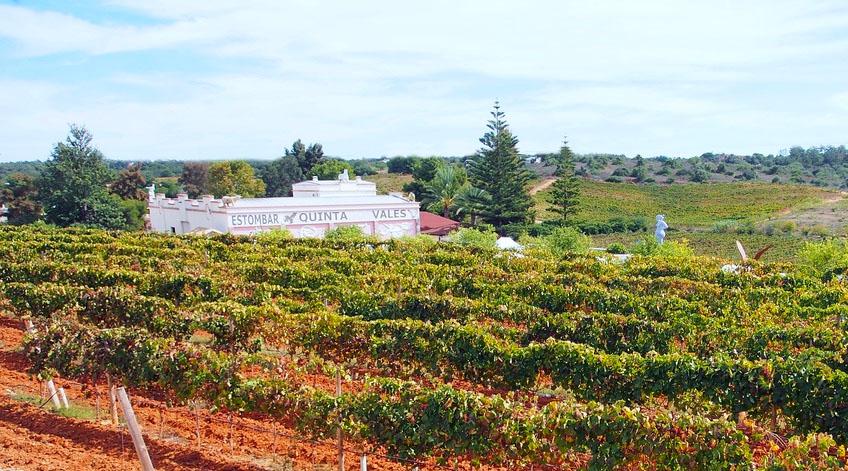 Algarve Wine Tour - Quinta dos Vales Vineyard