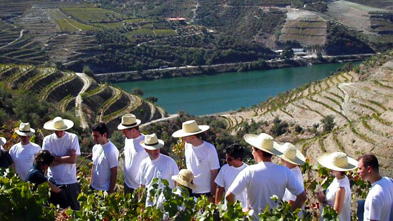 Best Wine Harvest Tours in Portugal