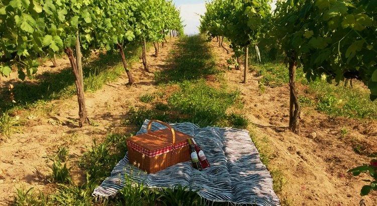 quinta_santa_cristina, picnic, vineyards, quinta de soalheiro, vinho verde, wine region, portugal