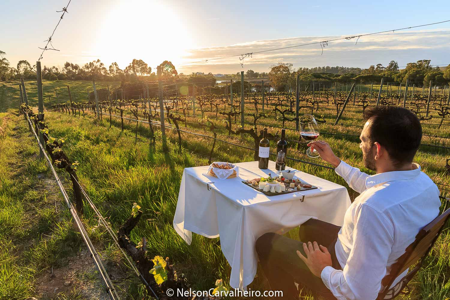 How to Choose the Right WineTasting Tour