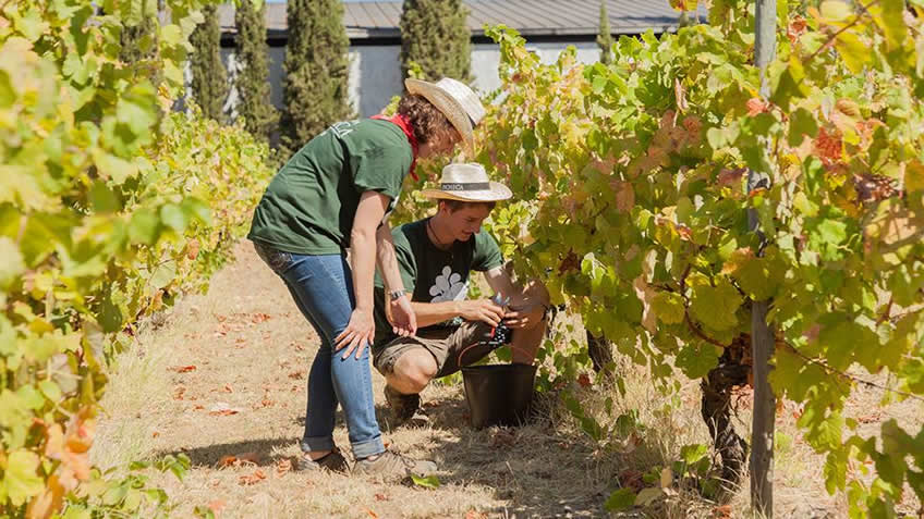 Harvesting for a Day in Douro and Lisbon