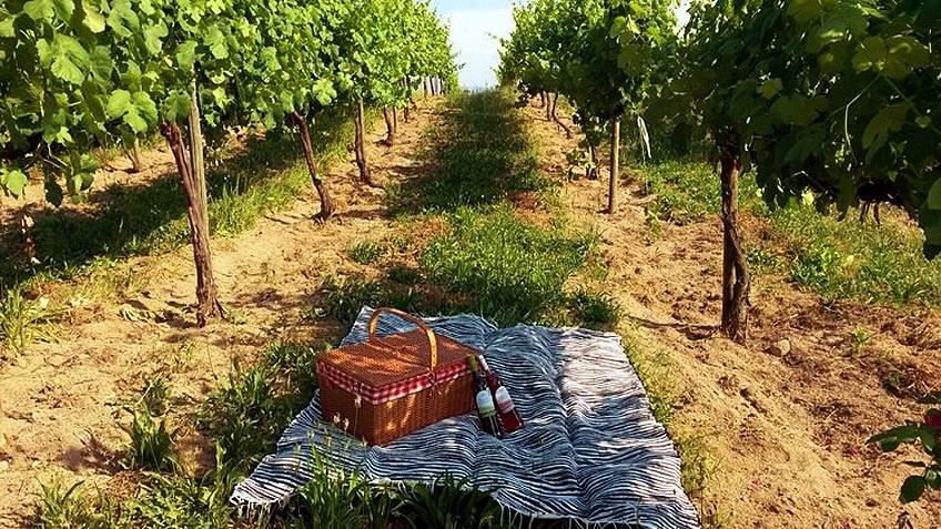 Yet another Harvest Day Experience - Vinho Verde Region