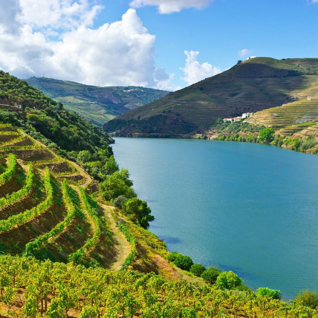 A list of Portuguese Grape Varieties