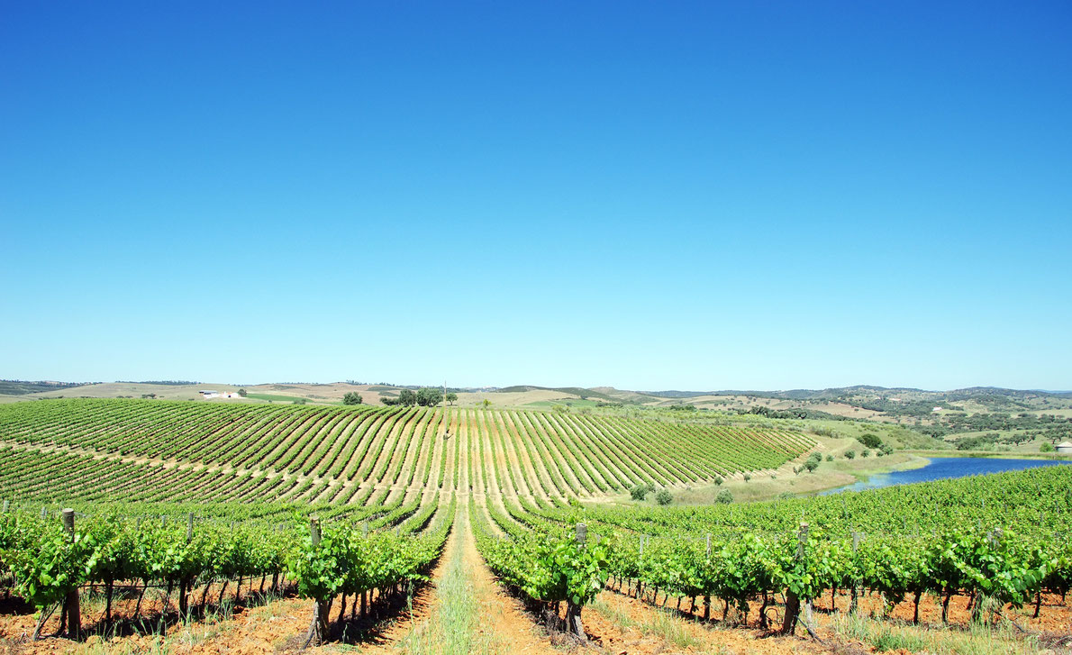 Planning a Luxury Wine Tour in Portugal