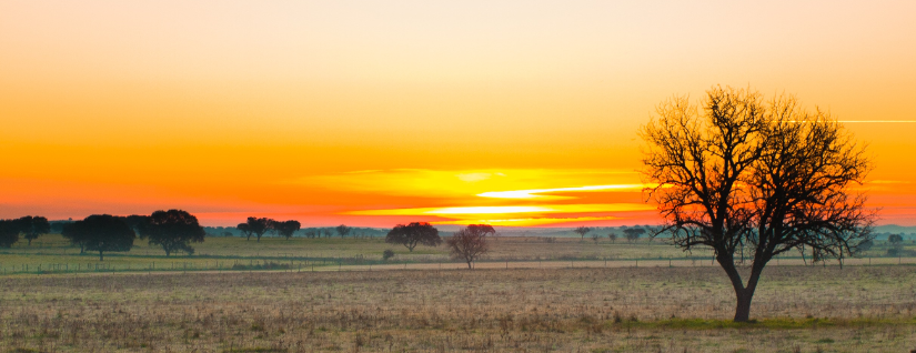 Alentejo: where Authenticity and Tranquility stand for Excellence and Acknowledgement!