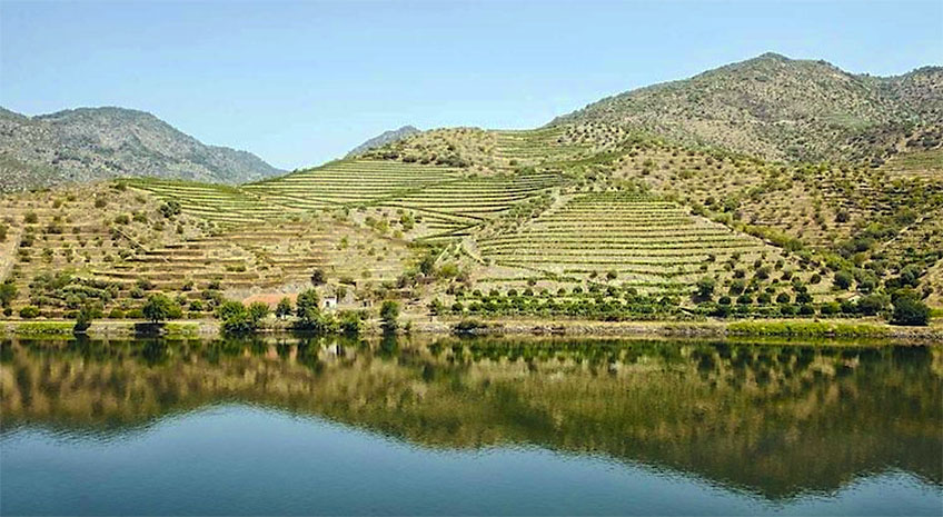 Surprising Portuguese Wine Destinations Yet to be Discovered